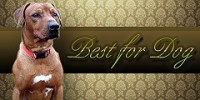Best for Dog